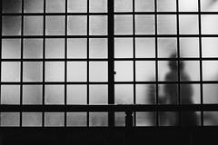 (birdmad_) Tags: blackandwhite black white monochrome silhouette shadow backlight shojiscreen japan 寺 白黒 白黒写真 モノクローム モノクロ
