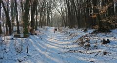 019Feb 07: Dubravska Hlavica Winter Walk (Johan Pipet 2M+ views) Tags: flickr winter zima snow sneh forest les hora greenwood sunny landscape nature príroda trees stromy dubravka dubravska hlavica bratislava outskirts slovakia slovensko eu europe palo bartos bartoš canon g7x