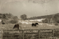 Overcast (* Gemini-6 * (on&off)) Tags: sky clouds winter fence snow horse equine monochrome grunge vintage hdr hss