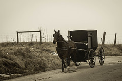 Amish of Holmes County [FlickrFriday] [Give Peace a Chance] (trustypics) Tags: amish flickrfriday givepeaceachance holmescounty buggie horse