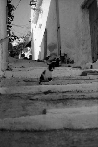 straatkatten in Rubite