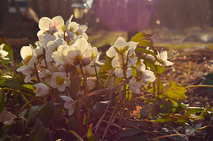 Waiting for Spring (ChemiQ81) Tags: ciemiernik działka ogród garden flowers kwiaty jaro wiosna spring basin outdoor sky польшча полша 波兰 pollando poola puola pologne πολωνία פולין pholainn pólland ポーランド lenkija polija polanya польща lengyelországban polonia poljska польша chemiq polsko polish polen poland polska