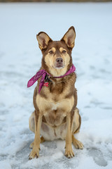 Ruby (luke.me.up) Tags: nikon z6 nikonz6 50mm nikons50mm dog dogs dogphotography
