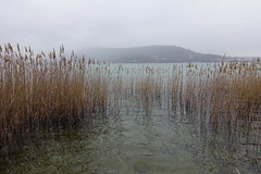 Reed @ Lake Annecy @ Petit port @ Annecy-le-Vieux (*_*) Tags: winter hiver 2019 march afternoon europe france hautesavoie 74 annecy annecylevieux savoie lacdannecy lakeannecy lac lake petitport