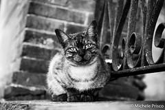 Look into my eyes (Mikyy81) Tags: cat eyes segovia spain blackandwhite nikon d810 twop
