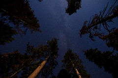 Starry Forest (TheReilDeal) Tags: kingscanyon kingscanyonnationalpark backpacking camping hiking nature california nationalpark nightsky stars milkyway pinetrees forest