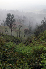 Java - Volcan Kawah Ljen (jmboyer) Tags: ba1113 java volcan kawahlien ©jmboyer indonesie indonésie asie asia travel canon géo
