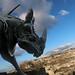 Rinoceronte da guerra