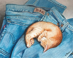 A Great Place to Nap (GayleMaurer006) Tags: kitten jeans nap cat