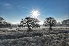 Frosty morning sun burst! (Nina_Ali) Tags: sunburst sunflare nature winterlandscape bradgatepark leicestershire landscape january2019 frost ice belowzero cold tree sundaylights