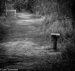 Rest Along the Way - HMBM (11Jewels) Tags: canon 70300 monochromemonday benchmonday marshrabbitrun lakelandfl circlebbarreserve