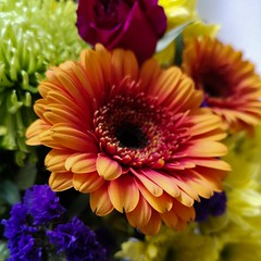 I've been as grey as the sky and as bright as bouquet 💐 (Mellisapix) Tags: gift petals colourful aster african daisy gerbera flower floral flora bouquet flowers vibrant bright