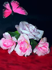 """""""Rose is a Rose"""" Smile on Saturday (marieschubert1) Tags: flower pastelcolor rose roses butterfly silkflowers stilllive roseisarose smilesonsaturday"""