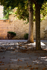 Shady courtyard (.Stephen..Brennan.) Tags: da70 fremantle pentax pentaxk3 trees perth westernaustralia australia au 70mm