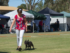 Cohuna dog show (3) (Boobook48) Tags: australia dogshow cohuna victoria