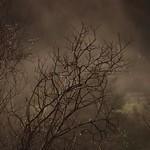 Rain and mist thumbnail