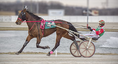 On the Move (sjoblues) Tags: harnessracing sulky action panning motion animal racing racetrack