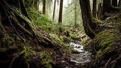 Small Forest Creek (rich trinter photos) Tags: mountainloophighway washington northwest landscape forest creek stream trinterphotos longexposure