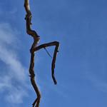 Craobh Dannsaidh/Dancing Tree thumbnail