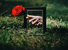 (BMADHudson) Tags: surreal surrealism flower rose plant grass green red illusion hand photoshop florida nature wildlife frame pictureframe moody filter deep project nikon nikond5500 300mm explore darkness conceptual valentines teenphotographer