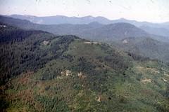 1962. Aerial view of sawfly damage in lodgepole and knobcone pine. Toketee Falls, Umpqua National Forest, Oregon. (USDA Forest Service) Tags: usda usfs forestservice foresthealthprotection stateandprivateforestry region6 r6 divisionoftimbermanagement pacificnorthwestregion insectanddiseasecontrol forestinsect foresthealth forestprotection forestentomology pnw sawfly neodiprion lodgepolepine knobconepine insectdamage toketeefalls umpquanationalforest oregon 1962 peterworr aerialphoto aerialphotography lowelevation oblique aerialsurvey aerialdetectionsurvey forestinsectanddiseasesurvey