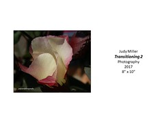 """Transitioning 2 • <a style=""""font-size:0.8em;"""" href=""""https://www.flickr.com/photos/124378531@N04/45734222945/"""" target=""""_blank"""">View on Flickr</a>"""
