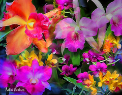 Tango (brillianthues) Tags: orchids black flowers flower nature colorful collage photography photmanuplation photoshop