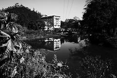 Still (Shell Daruwala) Tags: ricoh ricohgrdigital ricohpentaxgr grii blackandwhite bw monochrome india ricohgrii kerala reflection munnar lake water lakehouse foliage contrast highcontrast