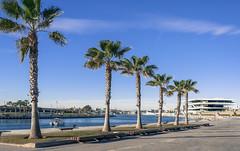 Veles e Vents (*Nenuco) Tags: veles e vents palmeras verde green azul blue edificio nikon d5300 18105 nikkor valencia jesúsmr