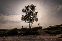Der wohl am meisten fotografierte Baum Fehmarns (Re Ca) Tags: fehmarn germany insel norddeutschland ostholstein ostsee schleswigholstein travel traveling baum tree staberhuk