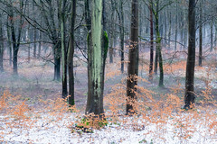 Snow in Forest (Rachel Dunsdon) Tags: 2019 hampshire blackwood forest snow
