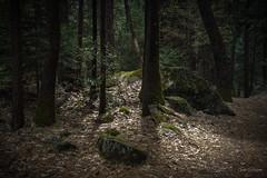 Take a Hike (GarSham) Tags: california spring natural landscape yosemite rocks nature nationalpark trees woods beauty color sierranevada hiking light