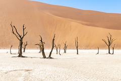 _RJS4679 (rjsnyc2) Tags: 2019 africa d850 desert dunes landscape namibia nikon outdoors photography remoteyear richardsilver richardsilverphoto safari sand sanddune travel travelphotographer animal camping nature tent trees wildlife