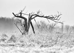 Something We Forget (John Westrock) Tags: blackandwhite tree nature landscape monochrome wisconsin midwest canoneos5dmarkiii canonef100400mmf4556lisusm johnwestrock