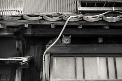猫 (fumi*23) Tags: ilce7rm3 sony street sonnar sel55f18z 55mm sonnartfe55mmf18za a7r3 animal katze neko cat chat gato blackandwhite bw monochrome fukuoka ねこ 猫 ソニー