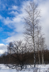 Winter forest / Зимний лес (dmilokt) Tags: природа nature пейзаж landscape лес forest дерево tree снег snow dmilokt nikon d850