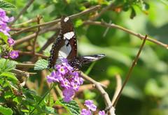 IMG_0125 (mohandep) Tags: iimb events birding nature wildlife flowers insects butterflies trees plants ugs aircraft