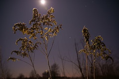 SunnyMoon (MikeSolfrank) Tags: blume nacht sterne mond outside nature light art sky winter night lake river blue flower