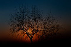 De luz, color y sombra (una cierta mirada) Tags: sunset tree silhouette landscape outdoors nature branches orange blue yellow colors canon