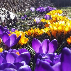 Here comes spring! (Doug Murray (borderfilms)) Tags: here comes spring