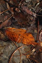 Leaves (historygradguy (jobhunting)) Tags: easton ny newyork upstate washingtoncounty leaves leaf