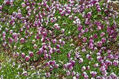 IMG_5593 (Roger Kiefer) Tags: dallas arboretum flowers outdoors beauty nature