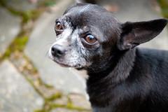 P1080333 (mireiatarres) Tags: hund perro dog detail detalle