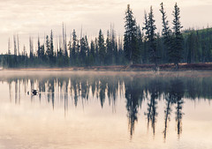 Early morning - Fall scenes from Yellowstone National Park, WY, USA (The Shared Experience) Tags: yellowstonenationalpark 2016 a6300 sonya6300 sonydslr nps nationalparks nps100 hotsprings geyser wild nature landscapes wildlife usa wy