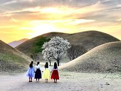 (hiart74) Tags: royaltomb girls kyungju blossom spring landscape korea
