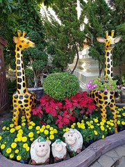 Wat Pho Chai 6 (SierraSunrise) Tags: วัด animals buddhism esarn giraffe isaan lambs nongkhai religion sheep statues temple thailand