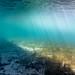 Flinders Pier Underwater-1