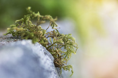 in every direction (rockinmonique) Tags: moss curb concrete macro light green grey yellow whimsical moniquewphotography canon canont6s tamron tamron45mm copyright2019moniquewphotography