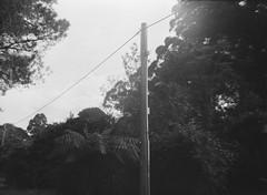 Utility pole (Matthew Paul Argall) Tags: belomoetude fixedfocus meniscuslens 120film 120 mediumformat blackandwhite blackandwhitefilm utilitypole