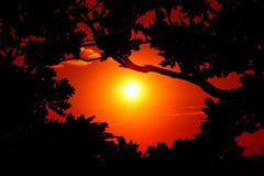 Oak framed sunset ©twe2009☼ (theWolfsEye☼) Tags: thewolfseye schweiz switzerland sunset sonnenuntergang sonne sun oak oakleaves eiche eichenblätter gegenlicht backlight silhouette umriss